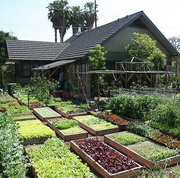 Дизайн сада и огорода фото 6 соток