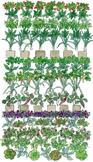 Обильный урожай с мини-грядки