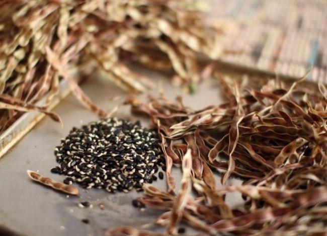 Семена: сбор и хранение